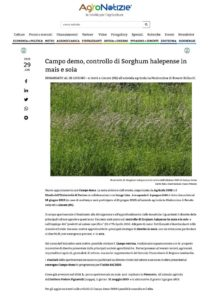 thumbnail of AgroNotizie – Controllo di Sorghum halepense in mais e soia