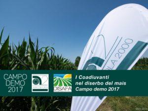 thumbnail of Campo Demo Coadiuvanti Mais